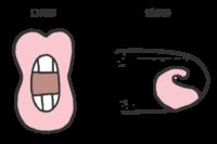 子音rの口の形と舌の形