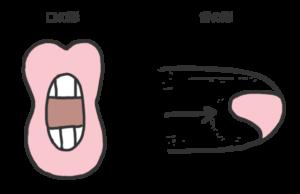 母音rの口の形と舌の形